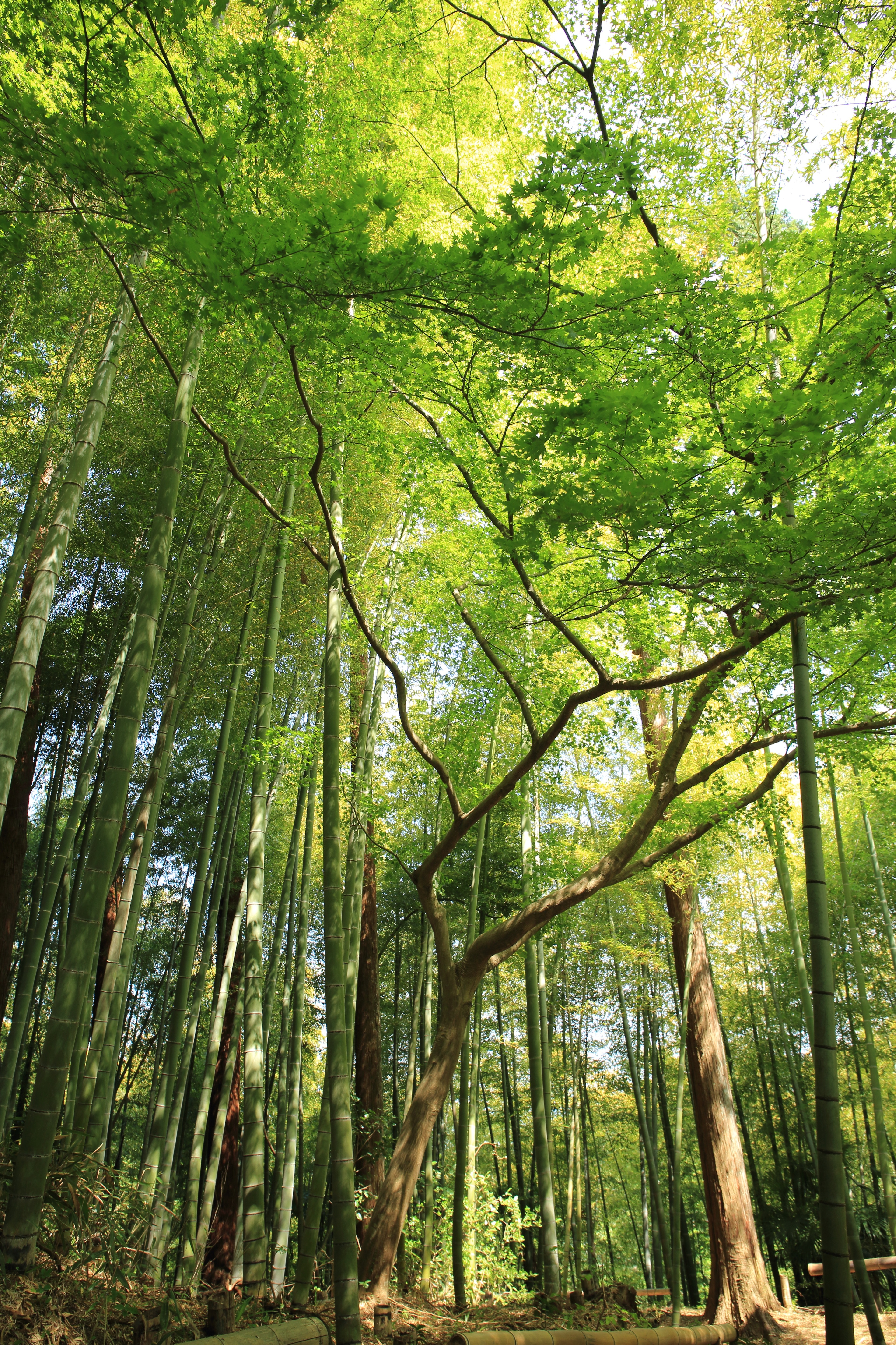 Paper use reduction to keep forests healthy
